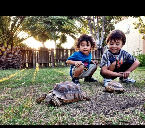 Ezekiel Iturburo, then 3 years old, and his brother Isai, then 5, with their new tortoise, Turbo, (larger one on left,) on the day it was gifted to them, September 25, 2012.