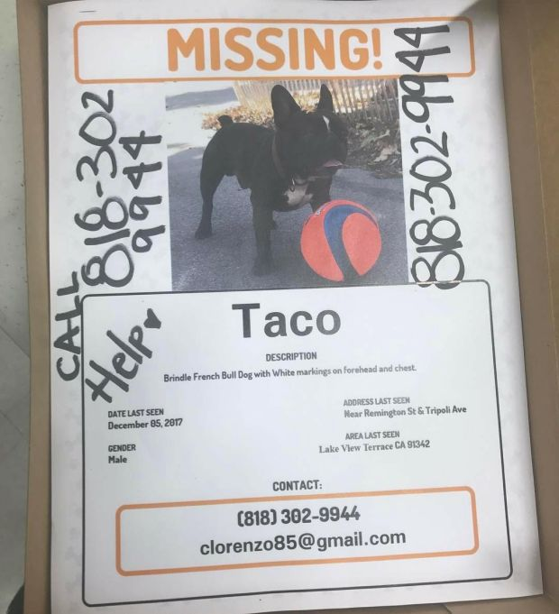 Cristina Lorenzo is distributing flyers in hopes of finding Taco.Courtesy Cristina Lorenzo/Facebook