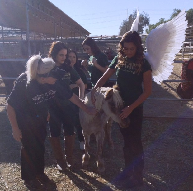 Cheerleaders from Tahquitz High School in Hemet will march in the Tournament of Roses Parade with the entry from the So Cal Mini Horse Sanctuary. Pictured, from left, are sanctuary operator Jeanne Candelario and cheerleaders Riley Carlini, Gabriela Deleon, Tuesday Ebersole and Alexia Plazola. Photo by Craig Shultz, staff