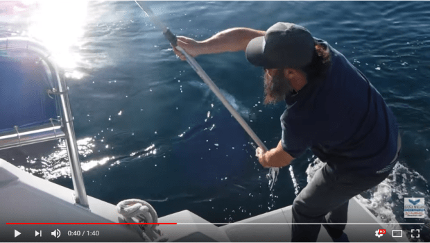 Dana Point Whale Watch boat saves common dolphin YouTube
