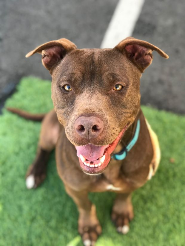 Mick is available for adoption at the Los Angeles County Department of Animal Care and Control shelter in Carson.