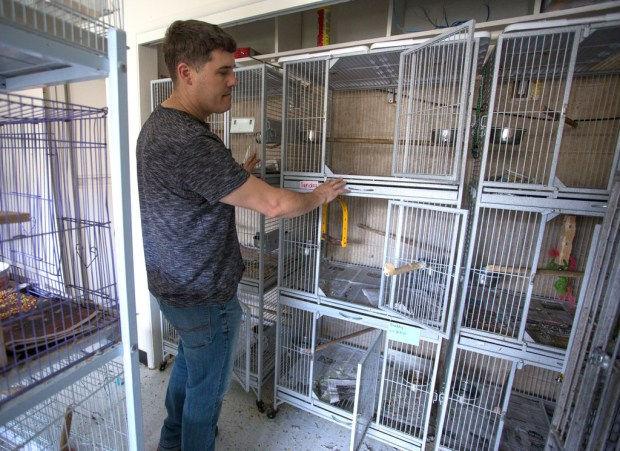 Erik Schreiner, one of the owners of Birds-N-Paradise in Menifee, looks at empty cages after burglars stole six parrots worth $8,950 on Friday, March 16, 2018. (Photo by Andrew Foulk, Contributing Photographer)