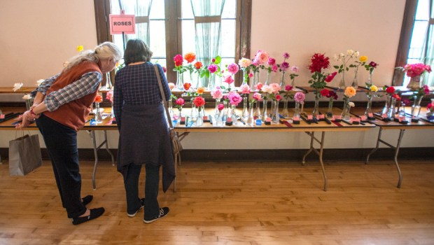 Flower shows are an educational community outreach and fundraiser for many garden clubs. The Southern California Garden Club, founded in 1927, holds their 52nd Standard Flower Show on April 21 in Encino. (File photo by Mark Rightmire, Orange County Register/SCNG)