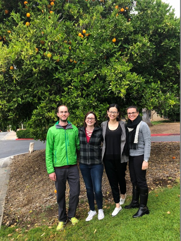 Wenbo Ma, UC Riverside professor of plant pathology, stands in front of a large orange tree on the UCR campus with researchers who worked on a potentially groundbreaking study examining how bacteria infect trees with citrus greening disease. From left to right are Simon Schwizer, Kelley Clark, Ma, and Eva Hawara. Ma is one of the lead authors on the study. (Photo by David Downey, Staff)