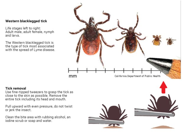 ticks-size