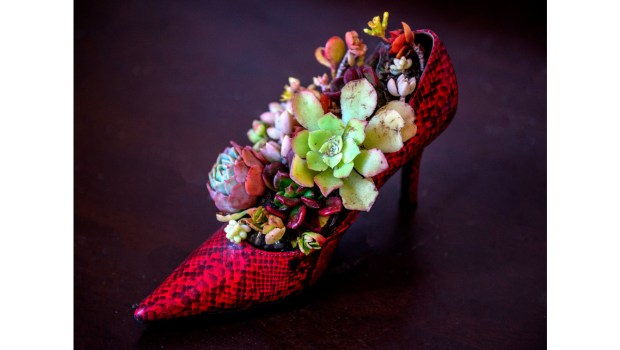 A red, high heel shoe makes a surprising container for planting succulents. (File photo by Mark Rightmire/Orange County Register/SCNG)