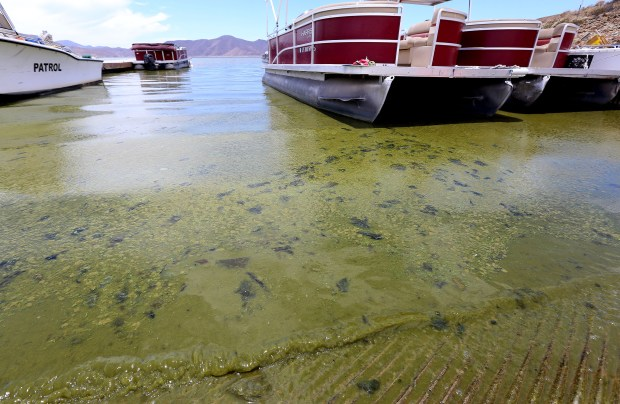 Diamond Valley Lake is experiencing a huge algal bloom, prompting officials to warn boaters about not getting in the water at Diamond Valley Lake in Hemet Friday, June 15, 2018. FRANK BELLINO, For THE PRESS-ENTERPRISE/SCNG