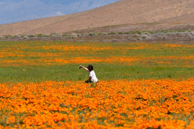 Wildflower etiquette: Stay on the trails, and don't stop