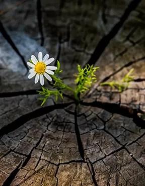 Beauty grows everywhere.