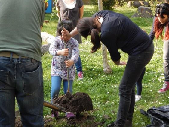 Parco scoiattolo : impianto albero