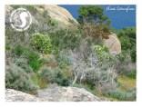 Album Macchia mediterranea