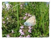 Album Lepidotteri