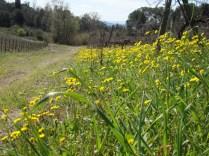 I difficili fiori gialli (Ass. Scoiattolo Rampante)