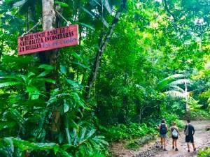Foresta tropicale in Colombia a Capurganà