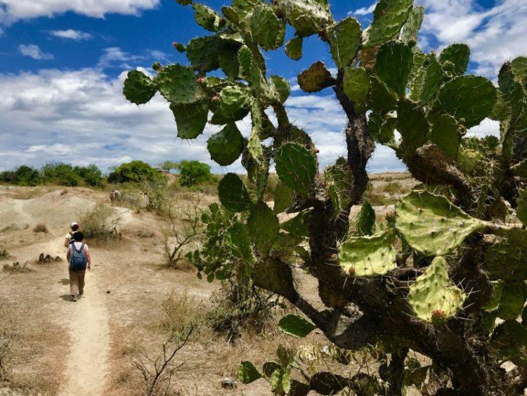 cactus deserto della tatacoa neiva huila colombia scomfort zone