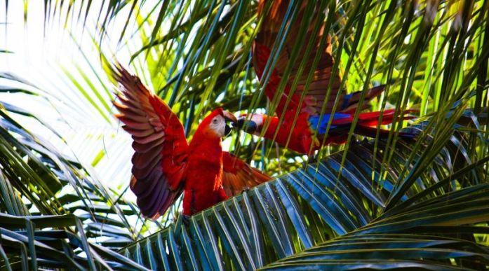 Pappagalli foresta amazzonica Colombia Leticia Puerto Narino