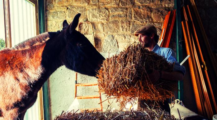 ragazzi attraversano italia a dorso di mulo woodvivors Francesco Paolo Lanzino regista