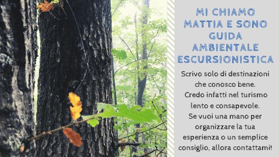 Contatti Guida Ambientale escursioni nel Parco Nazionale delle Foreste Casentinesi Monte Falco e Monte Falterona Mattia Fiorentini