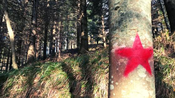 Stella rossa che indica il percorso del sentiero del partigiano Janosik trekking a Strabatenza comune di Bagno di Romagna vicino Santa Sofia Foreste Casentinesi Provincia di Forlì-Cesena