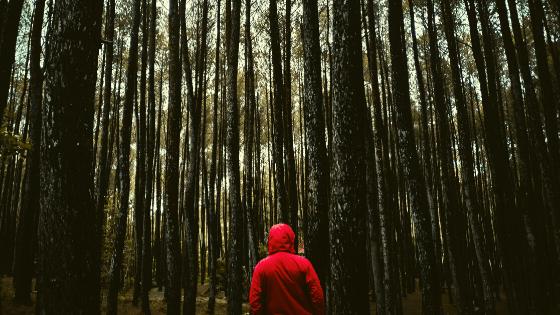 gli effetti del forest bathing cammino nella foresta benefici estate 2020
