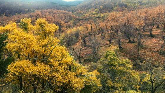 Importanza delle stagioni Forest Bathing bagno di foresta colori autunno
