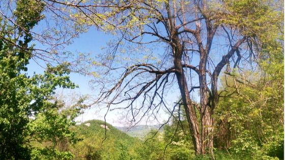trekking nel parco delle foreste casentinesi anello a piedi da cà di veroli passando per rio petroso