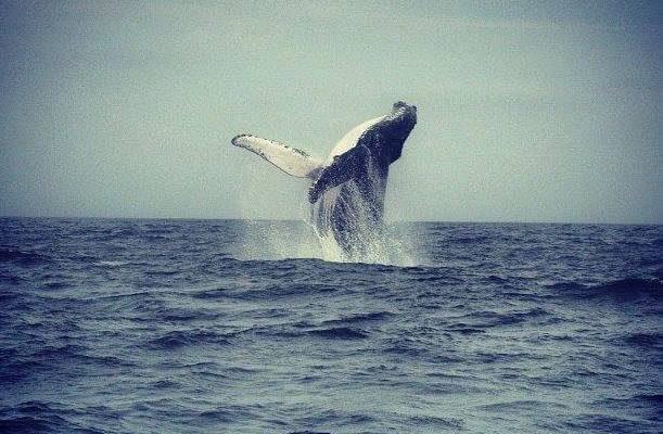 Ayampe – L'Ecuador tra surf e balene