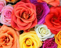 Beautiful Flowers Wallpapers for Desktop 2020 Collection