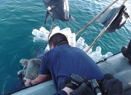 An embarked Coast Guard law enforcement detachment team member cuts a deep ocean sea turtle free from tangled fishing line Jan. 14. Aviators spotted the turtles during a helicopter patrol off the coast of Guatemala, in support of Operation Martillo. (Navy photo by Lt. j.g. Michelle Webster)