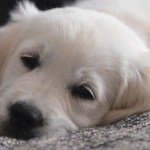Dog Is Depress