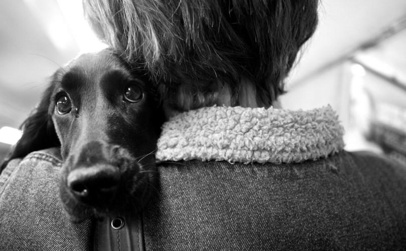 pet owner leaving her dog