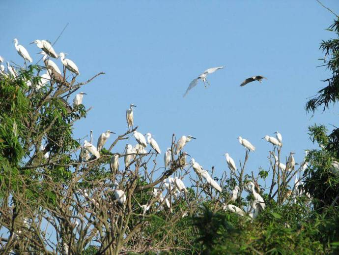 bang-lang-stork-sanctuary-top-things-to-do-in-can-tho