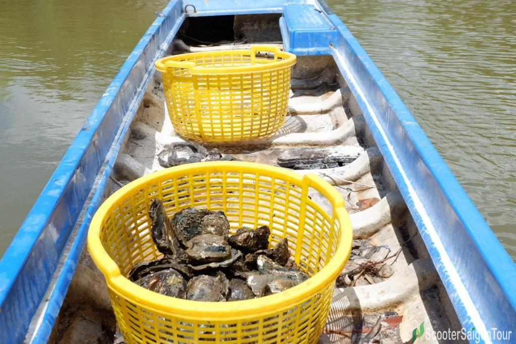 Catching Oyster In Mekong Delta 3