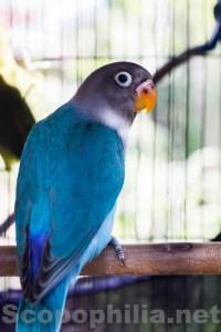 LoveBird-Pasar Burung Malang-8930