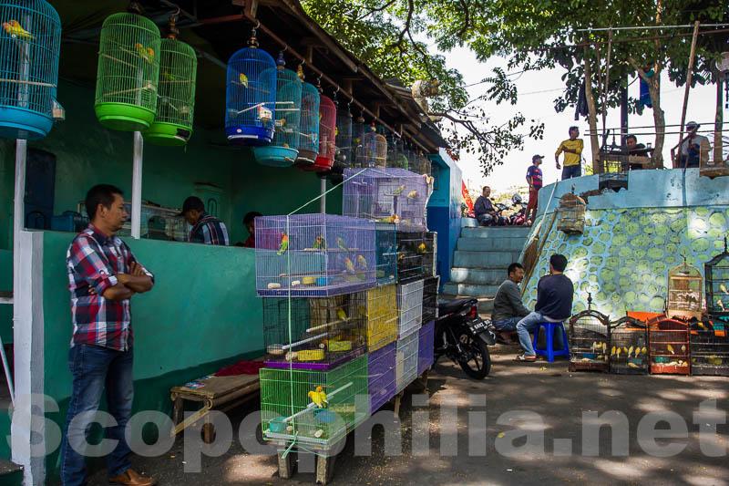 Pasar Burung yang rindang