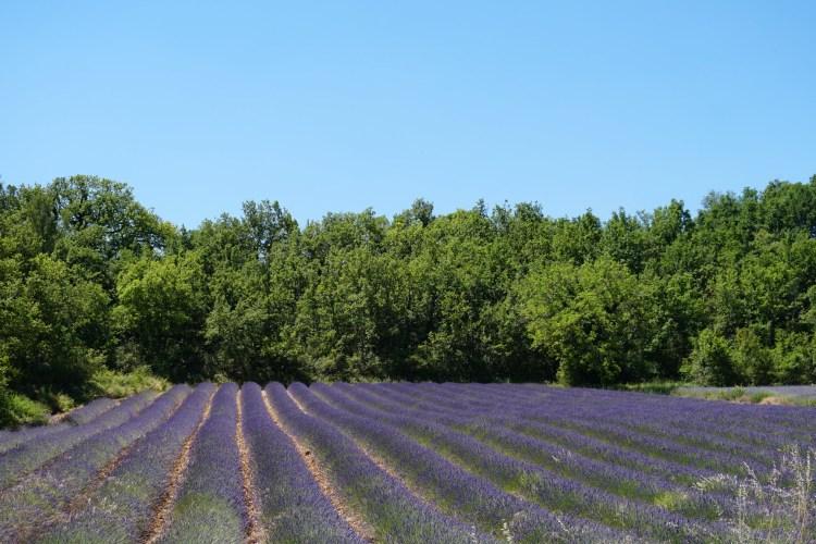 Viaggio in PROVENZA e fioritura della LAVANDA: ecco COSA SAPERE ...