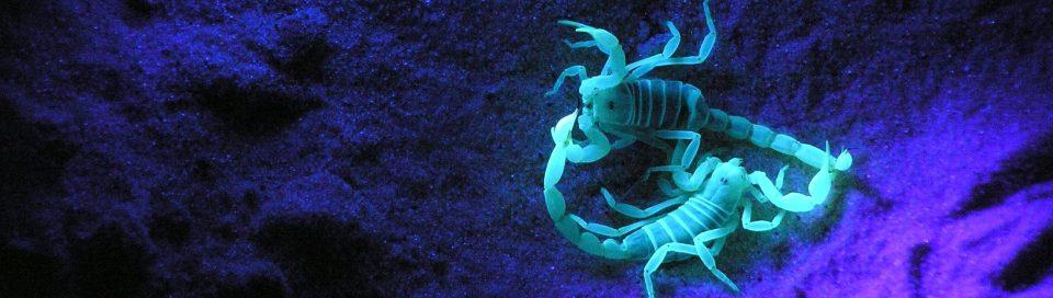 scorpions locked up