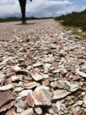 The driveway was seashells- how cool is that?