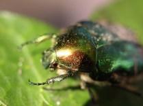 Dung Beetle, by Alfie Kidner