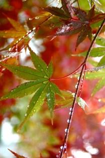 Leaf, by Catherine Sim