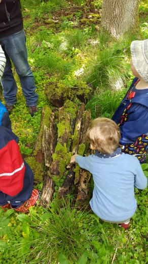 Searching under logs for mini beasts