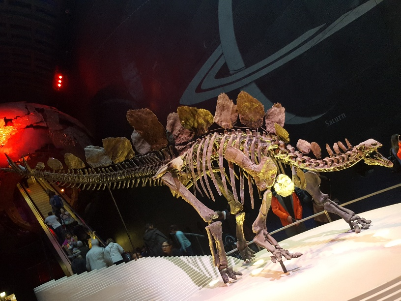 Tips on visiting the free Natural History Museum in London, with Kids
