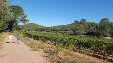 Vineyards in the south of Frane