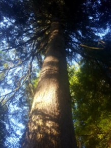 Experiencing Ardkinglas Woodland Garden