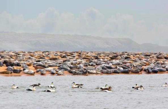 Seal colony courtesy of VisitAberdeenshire