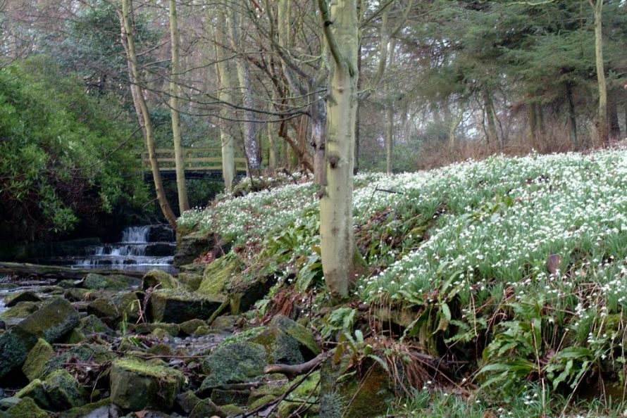 Scotland Snowdrop Festival with Kids