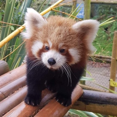 Rufio at Five Sisters Zoo