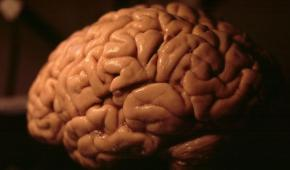 STUDY ALERT: Are bigger brains smarter? Evidence from a large-scale pre-registered study