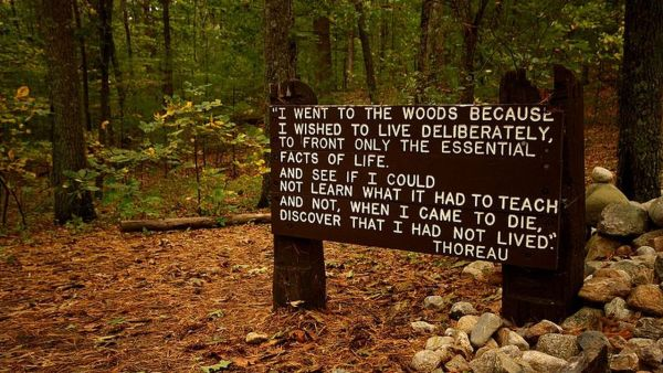 800px-thoreaus_quote_near_his_cabin_site__walden_pond.0