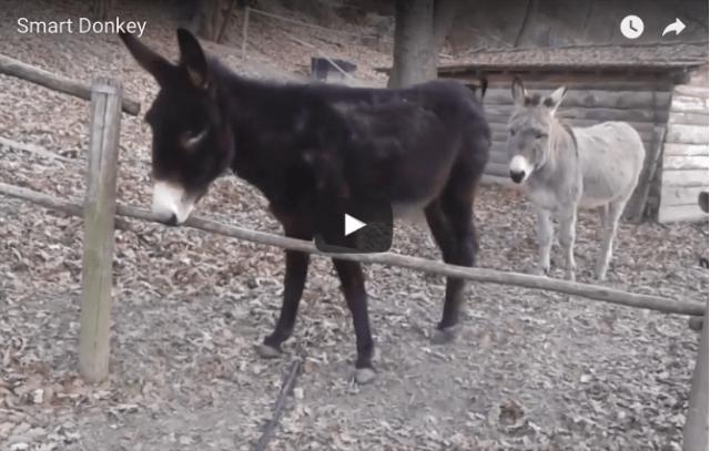 Hidden Insight and The Third Donkey | Scott Berkun